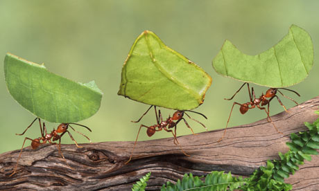 ant holding a leaf
